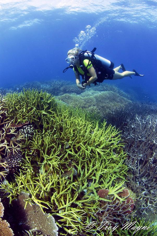 Coral reef. Copyright Troy Mayne.