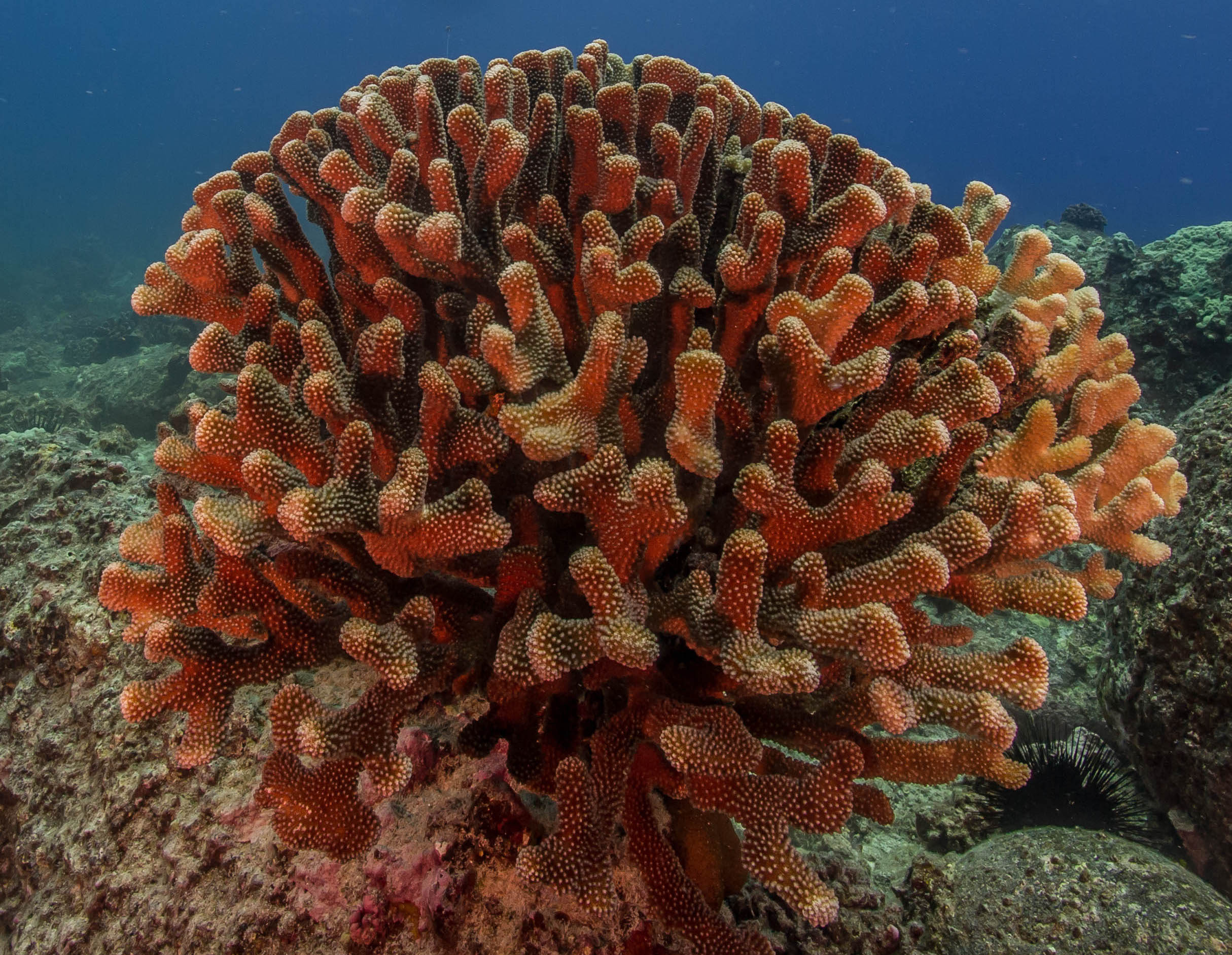 Picture Credit: Shaun Wolfe / Coral Reef Image Bank