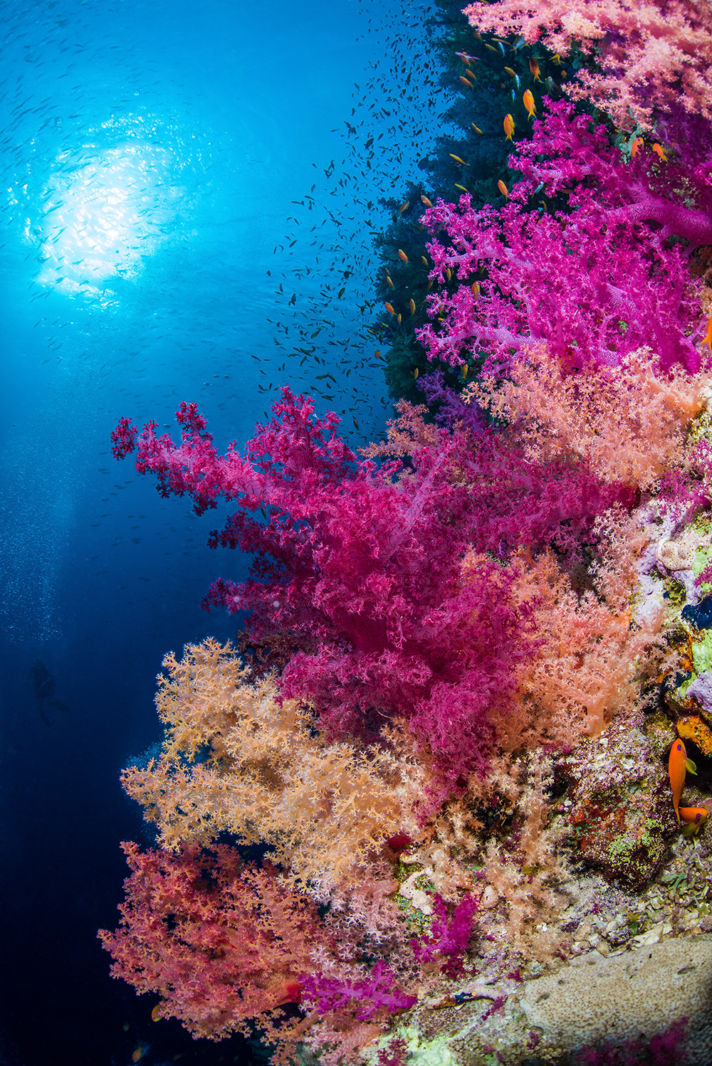 Picture Credit: Brook Peterson / Coral Reef Image Bank