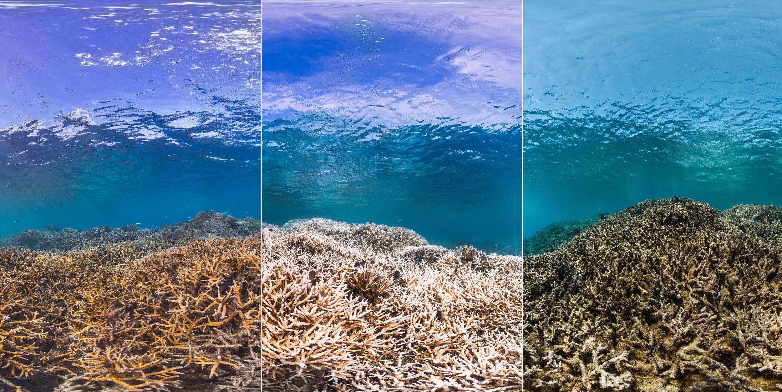 Picture credit: The Ocean Agency / XL Catlin Seaview Survey