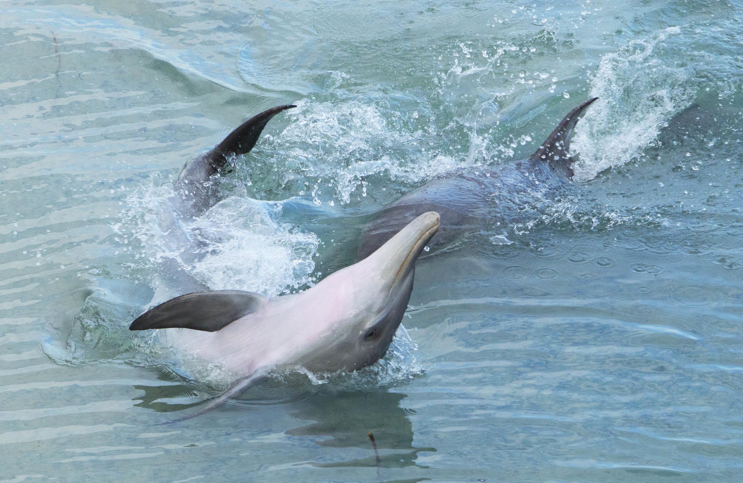 Dolphin Dynasty_3194-298-8-9.amend.jpg