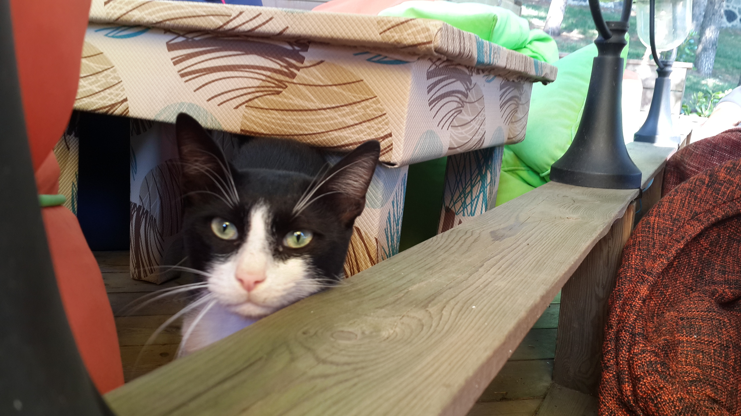 Cat visitor in the cafe