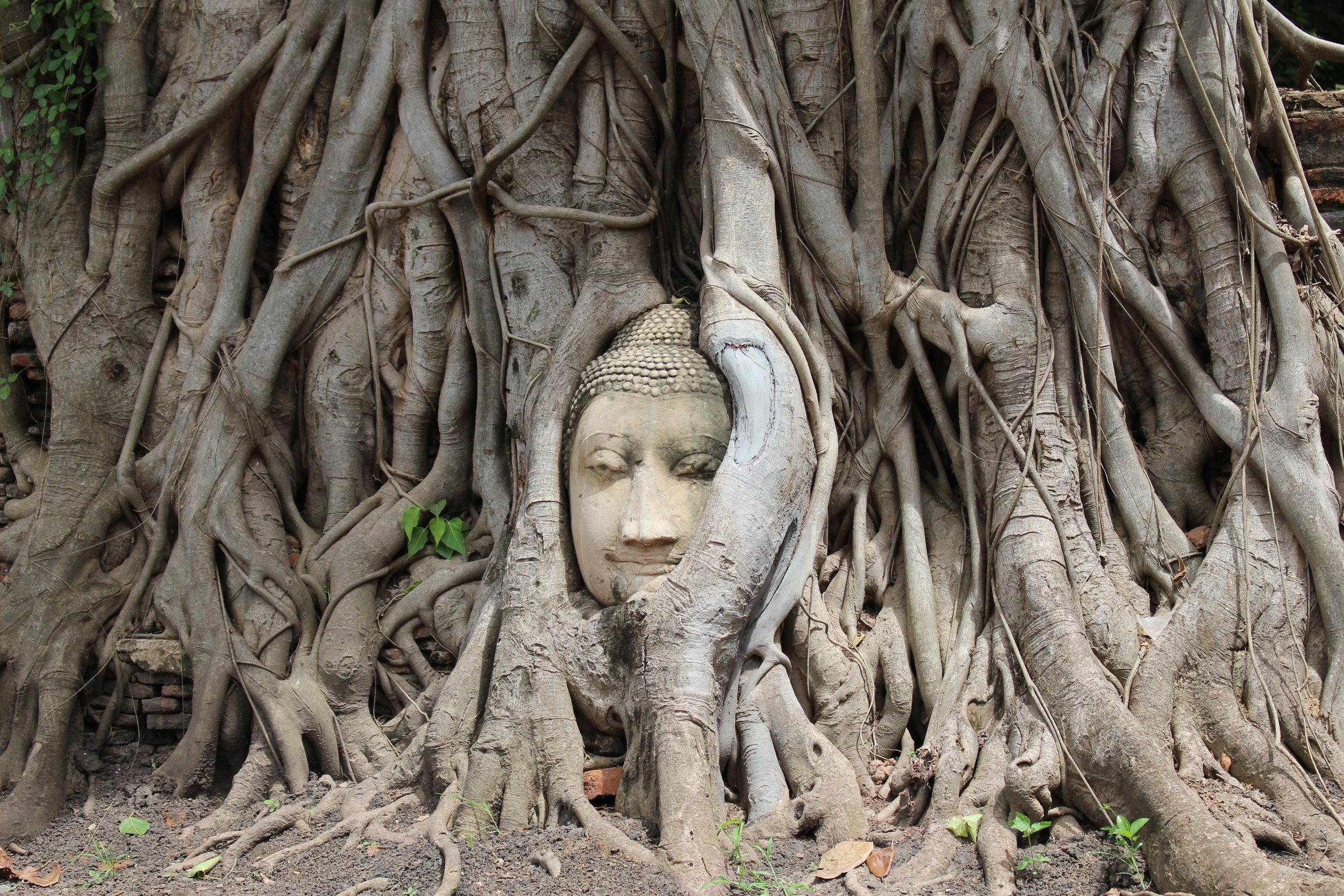 Ayutthaya's famous Buddha head