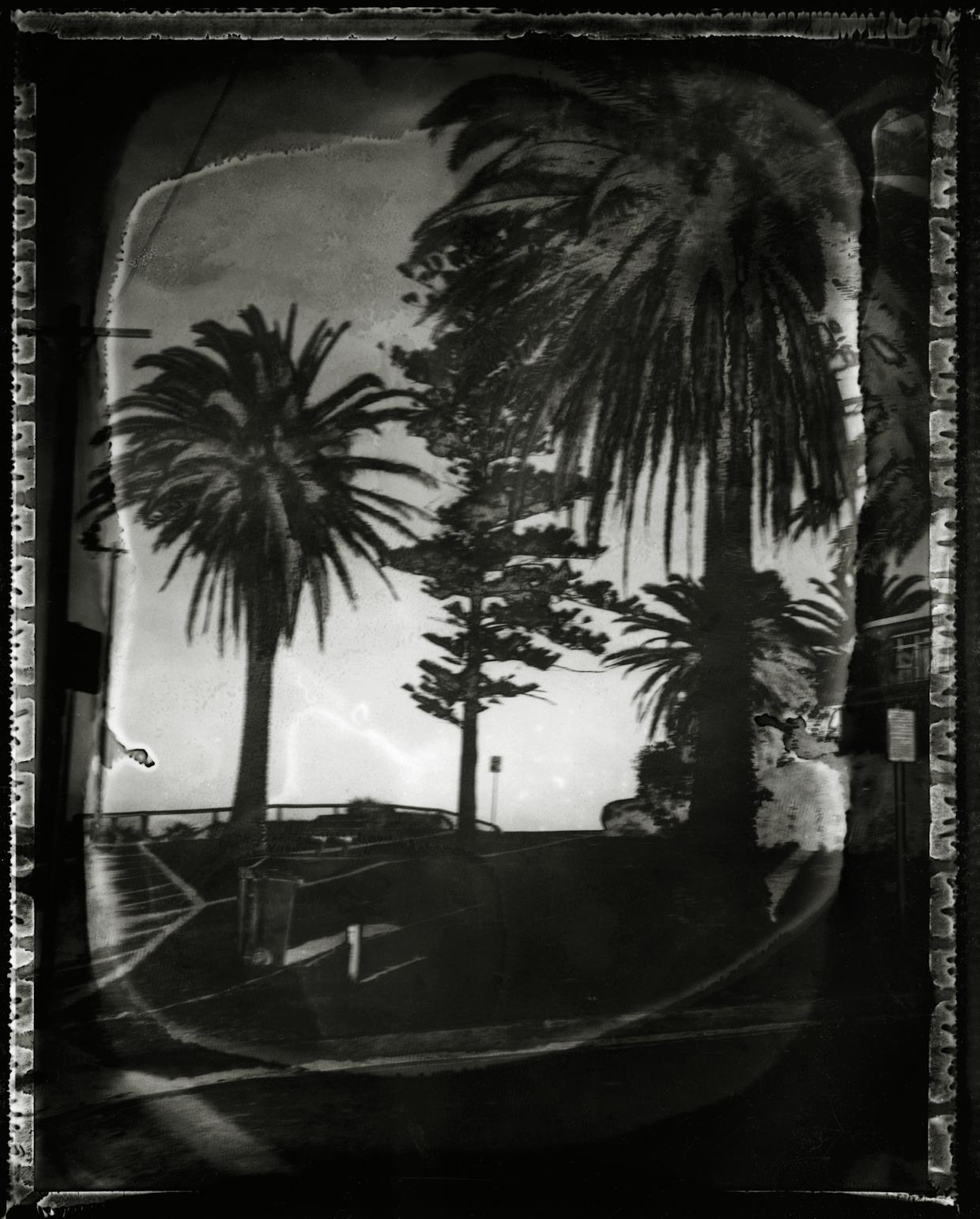Pola-arbre 1.jpg