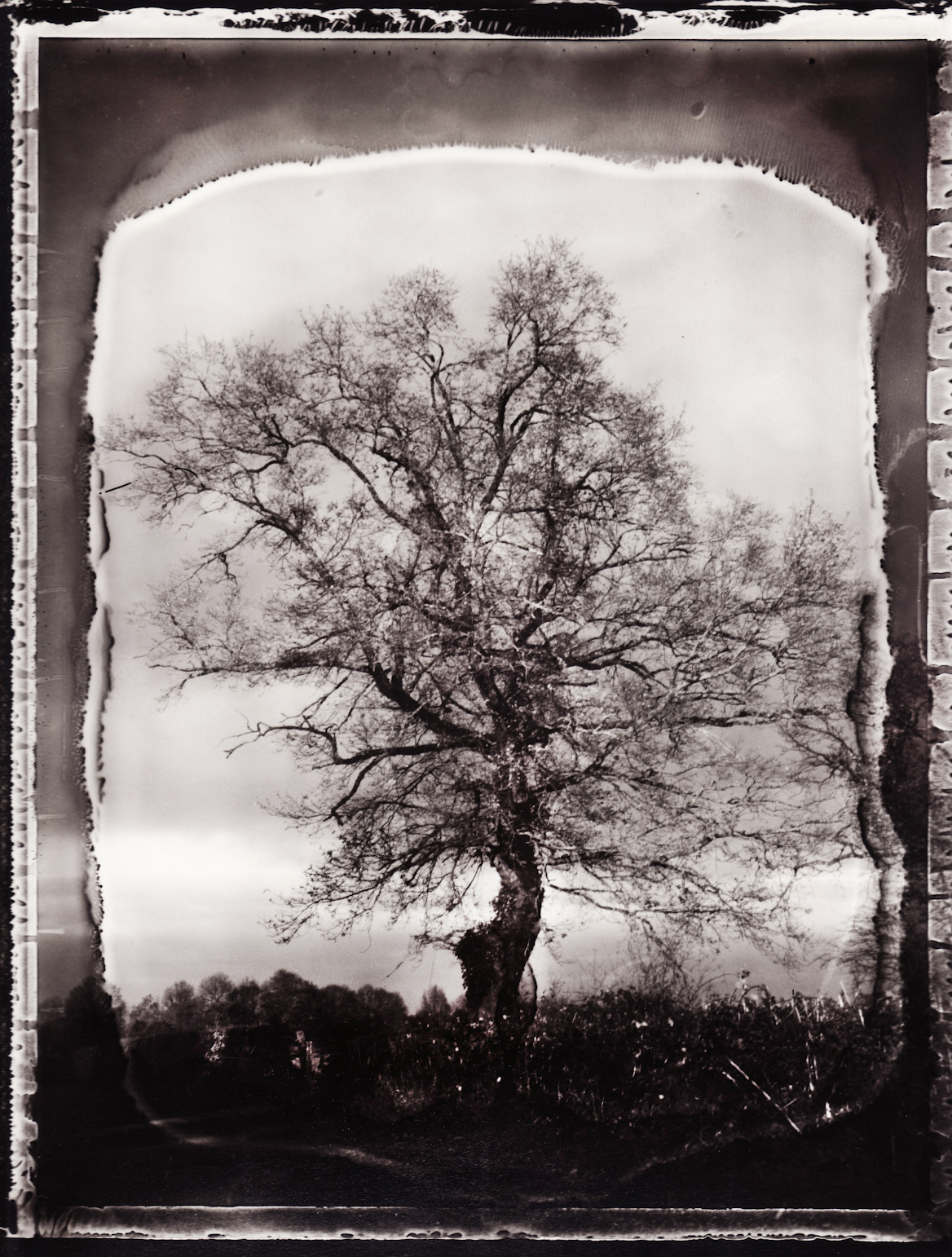 Pola-arbre 7.jpg