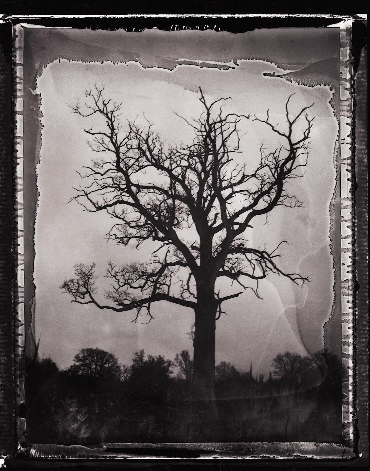 Pola-arbre 9.jpg