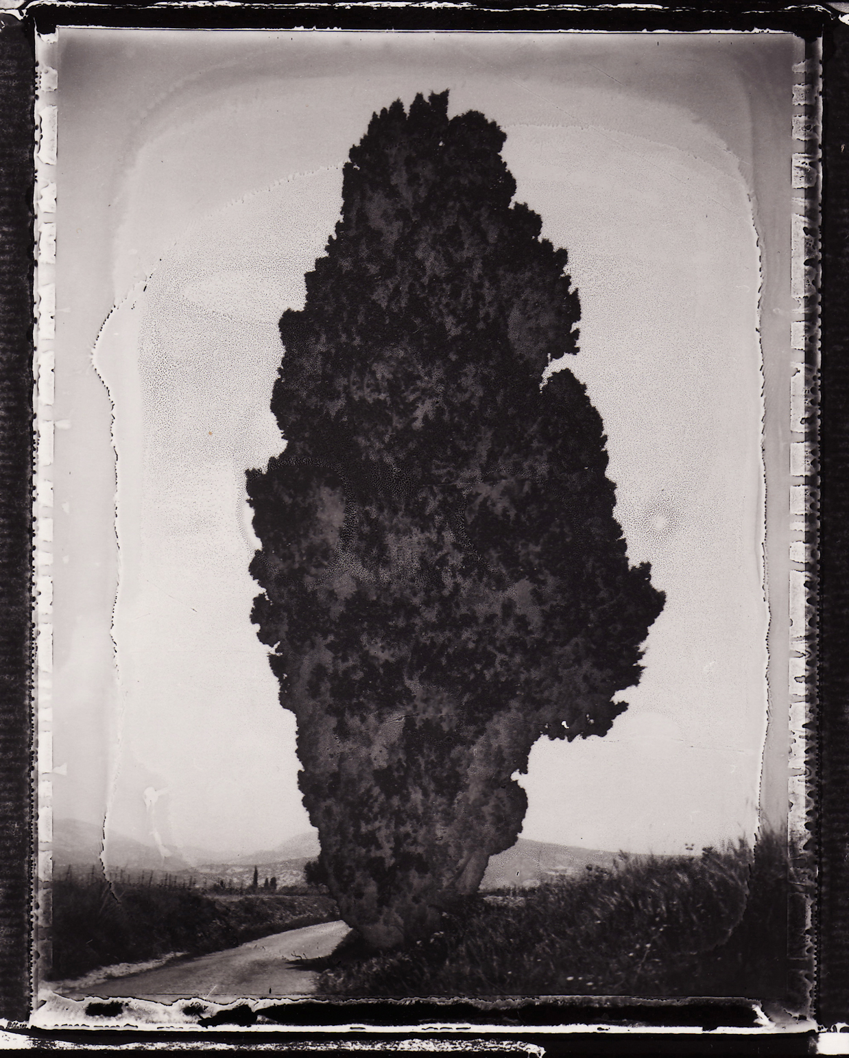 Pola-arbre 13.jpg