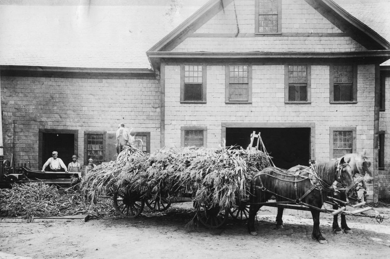 Horse Cart and Barn (1).jpg