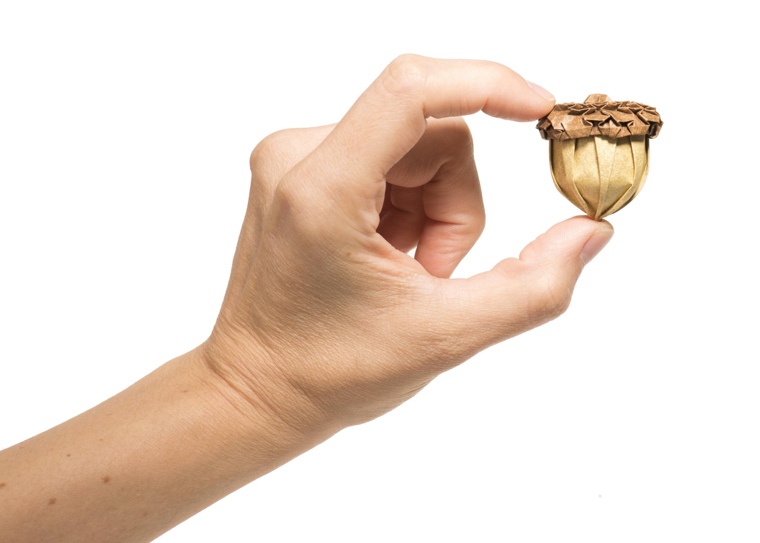 Acorn Hand.jpg