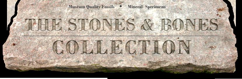 stones bones.png