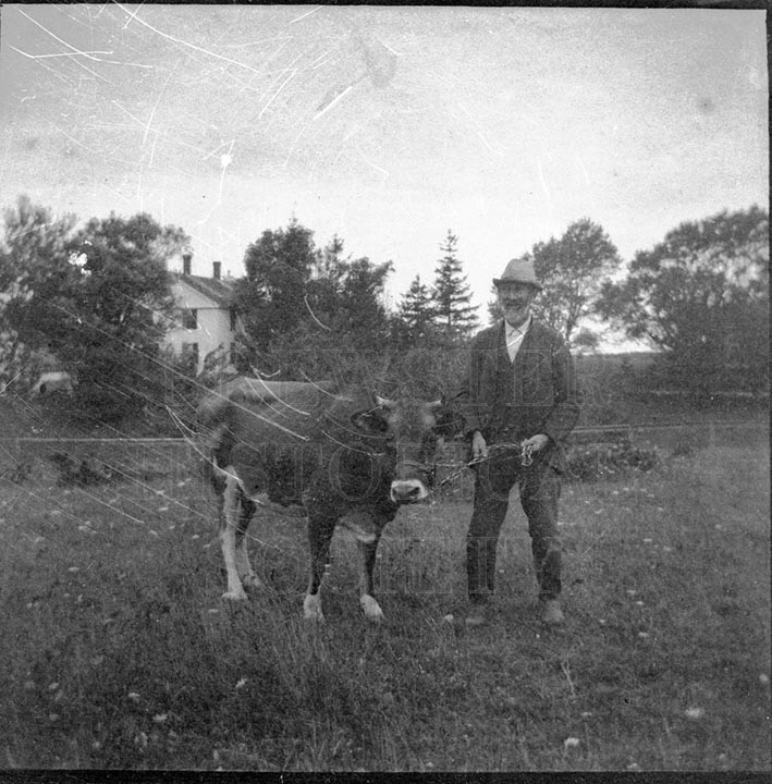14. 1970.10.166  John Consodine and Cow c.1900 - photographer Caro A. Dugan