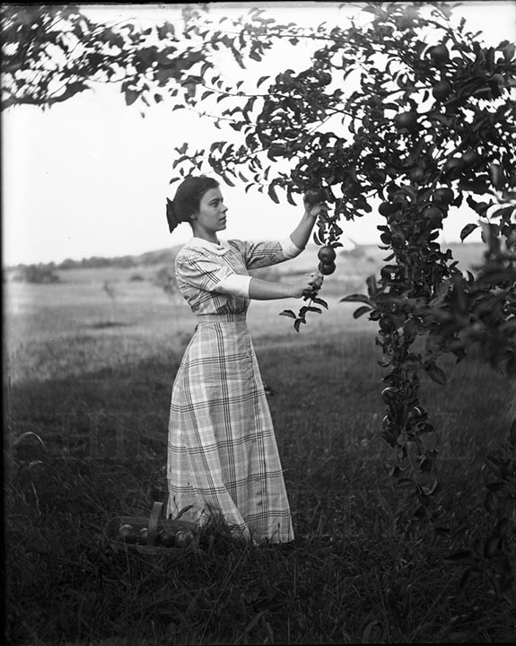 50. 1970.10.T932 Gathering Apples c.1900 - photographer Caro A Dugan