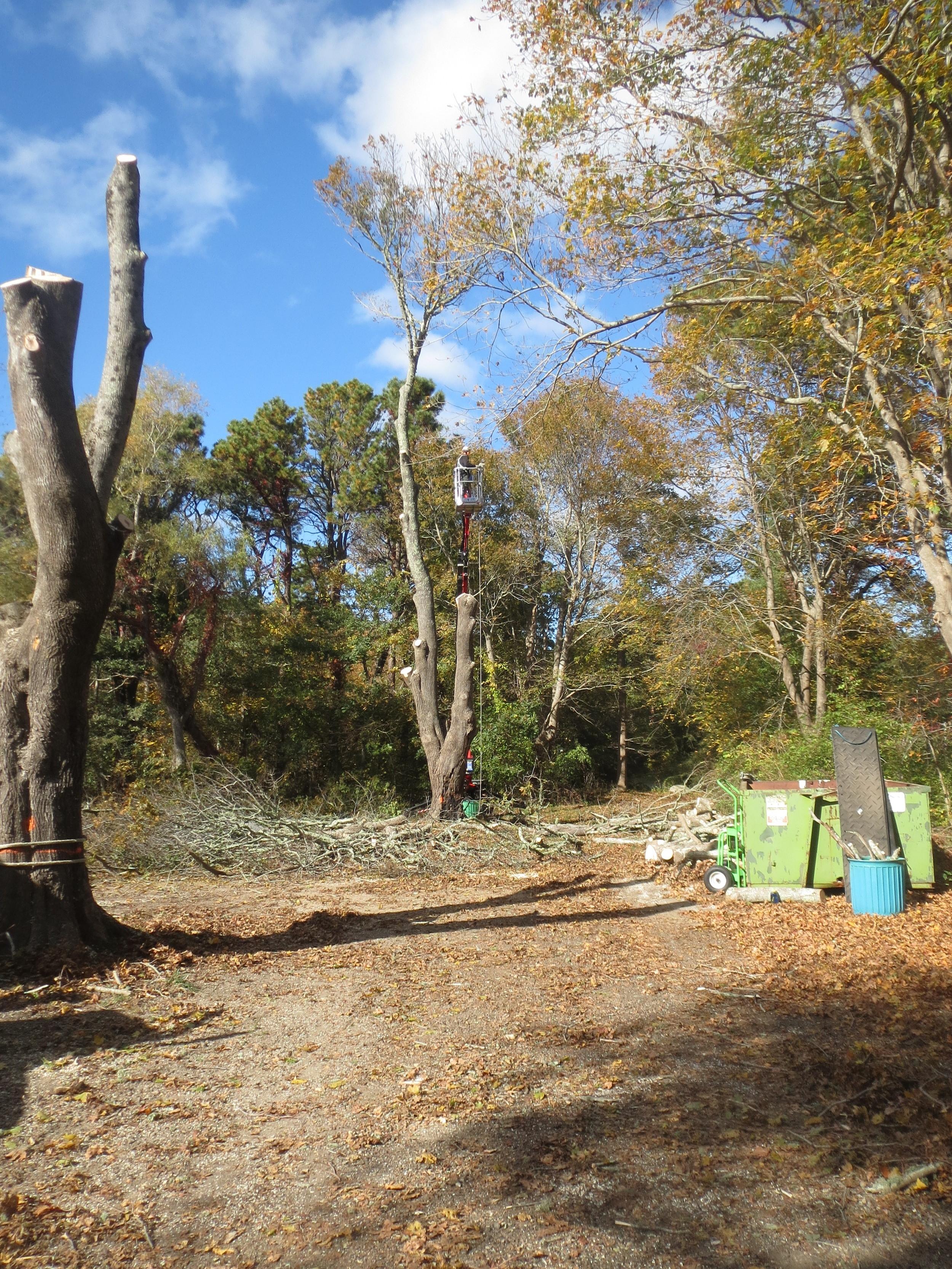 tree work.JPG
