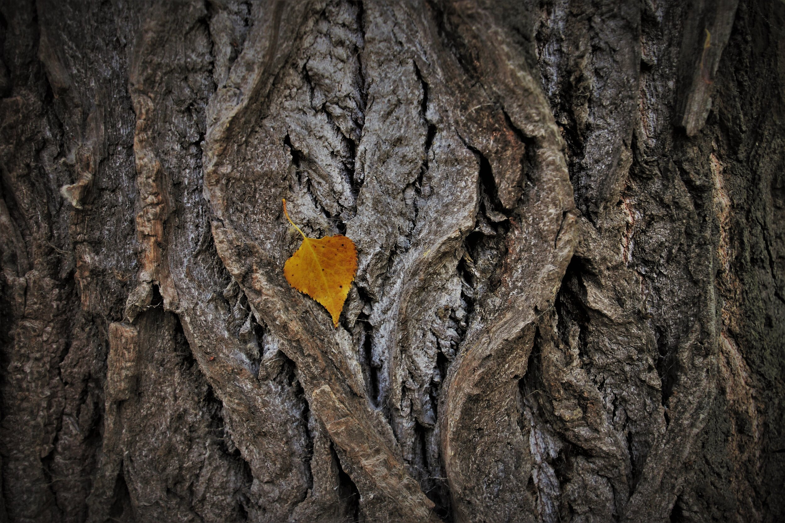Riddle #6 - The bark of the tree