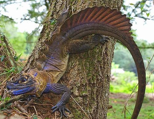 Image from reptilesmagazine.com