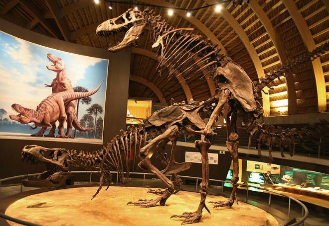Photo Credit: Mario Modesto. Jurassic Museum of Asturias. Wikimedia Commons
