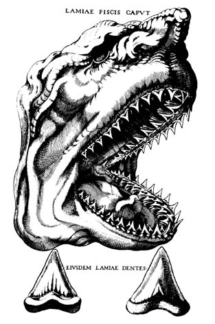 Steno's original reconstruction, from the 1660s, of a giant prehistoric shark based on teeth now associated with Megalodon.
