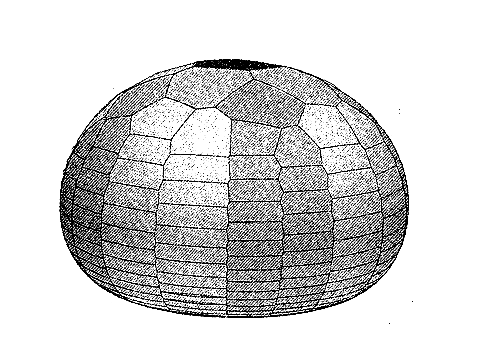 A virtual sea-urchin test constructed using Zachos' model (from  Zachos & Sprinkle 2011 )