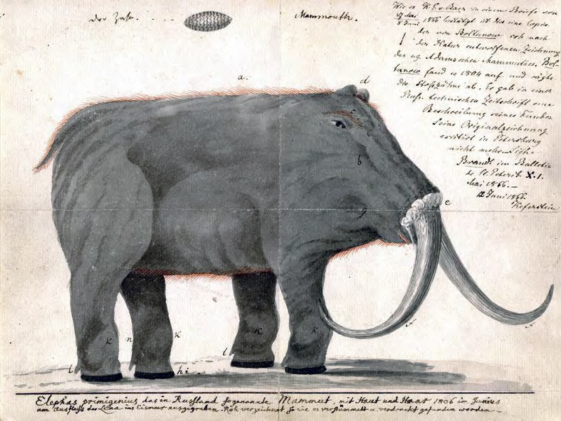 Reconstruction of a mastodon based on Rembrandt Peale's skeletal mount that toured Europe. Peale restored the animal with downward-curved tusks to suggest that the animal was a carnivore (Thomson 2008, 86-87). Image courtesy Wikipedia Commons.