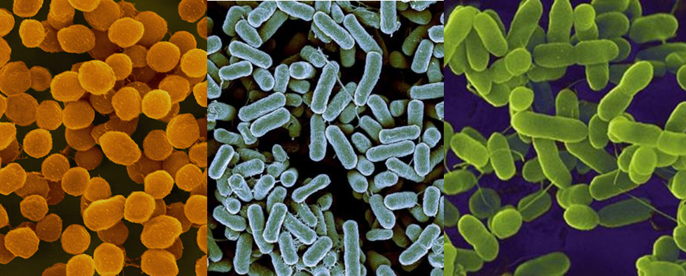 Bacteria, Archaea, and Protists, in random order. The reader that guesses which one is which wins his/her weight in yeast extract.