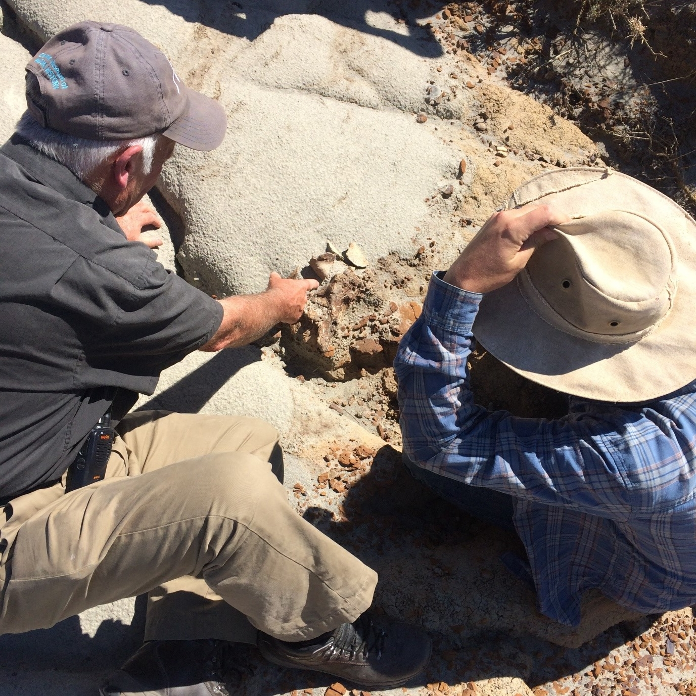 Proper paleontologists Don and Lee examine the fossilized brain-case. Pic: Joyce Havstad