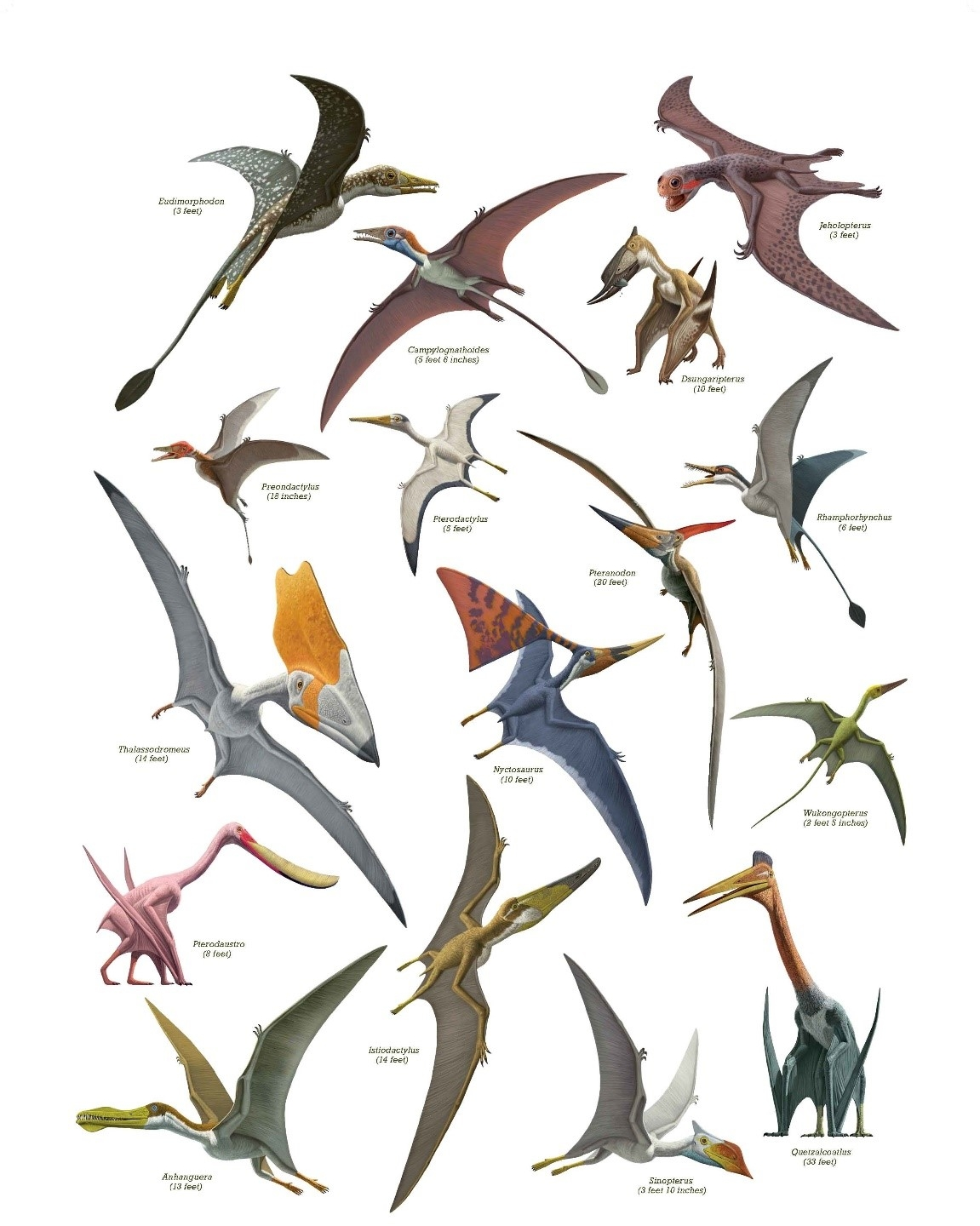 The AMNH's pterosaur poster