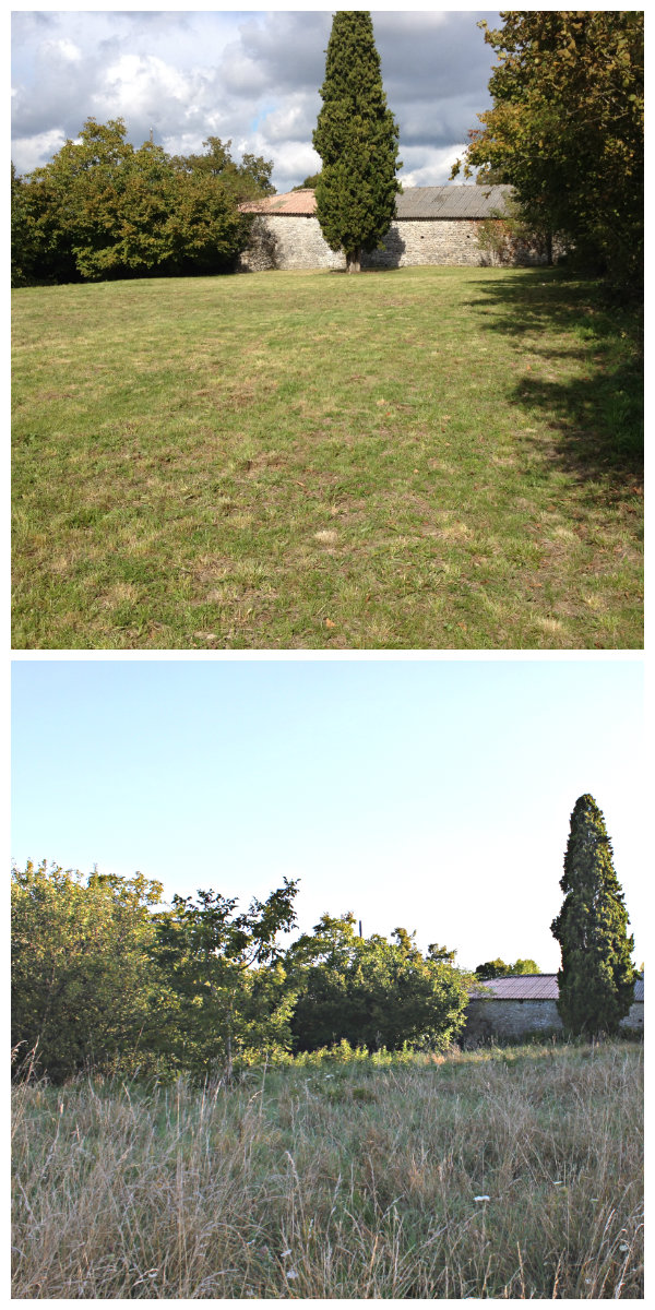 The Playing Field.Top picture autumn 2015, bottom picture autumn 2014.