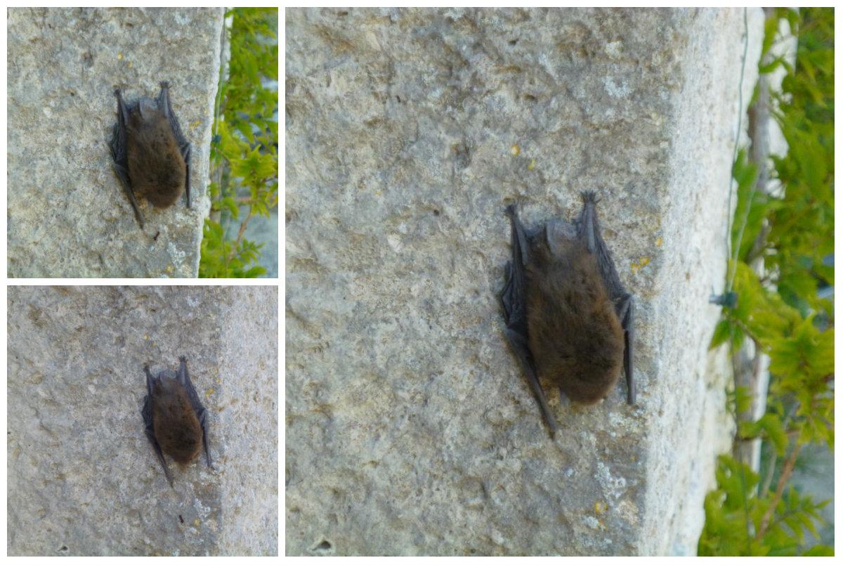 Bat on the bolly.