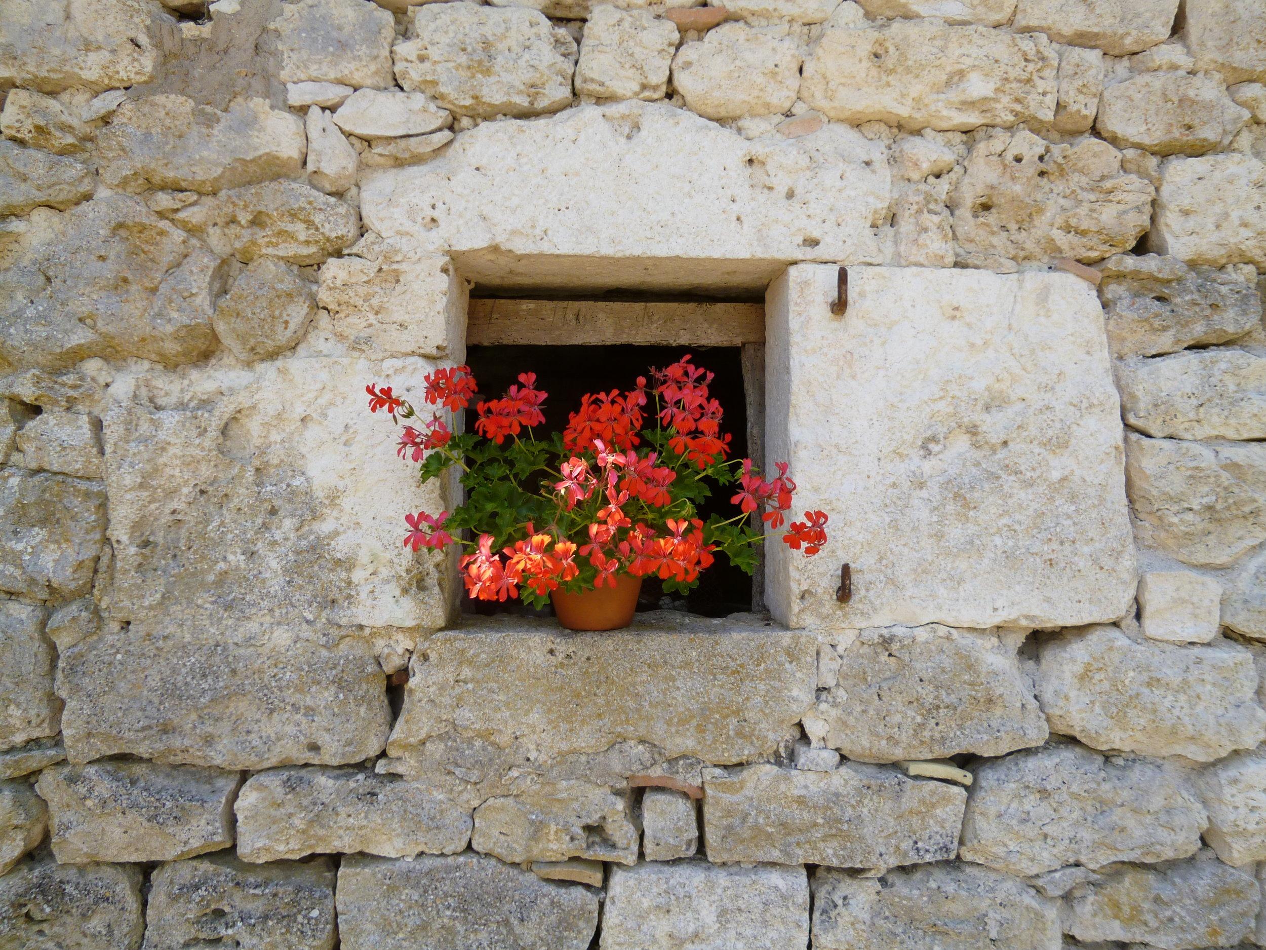 Geraniums in the barn windows.