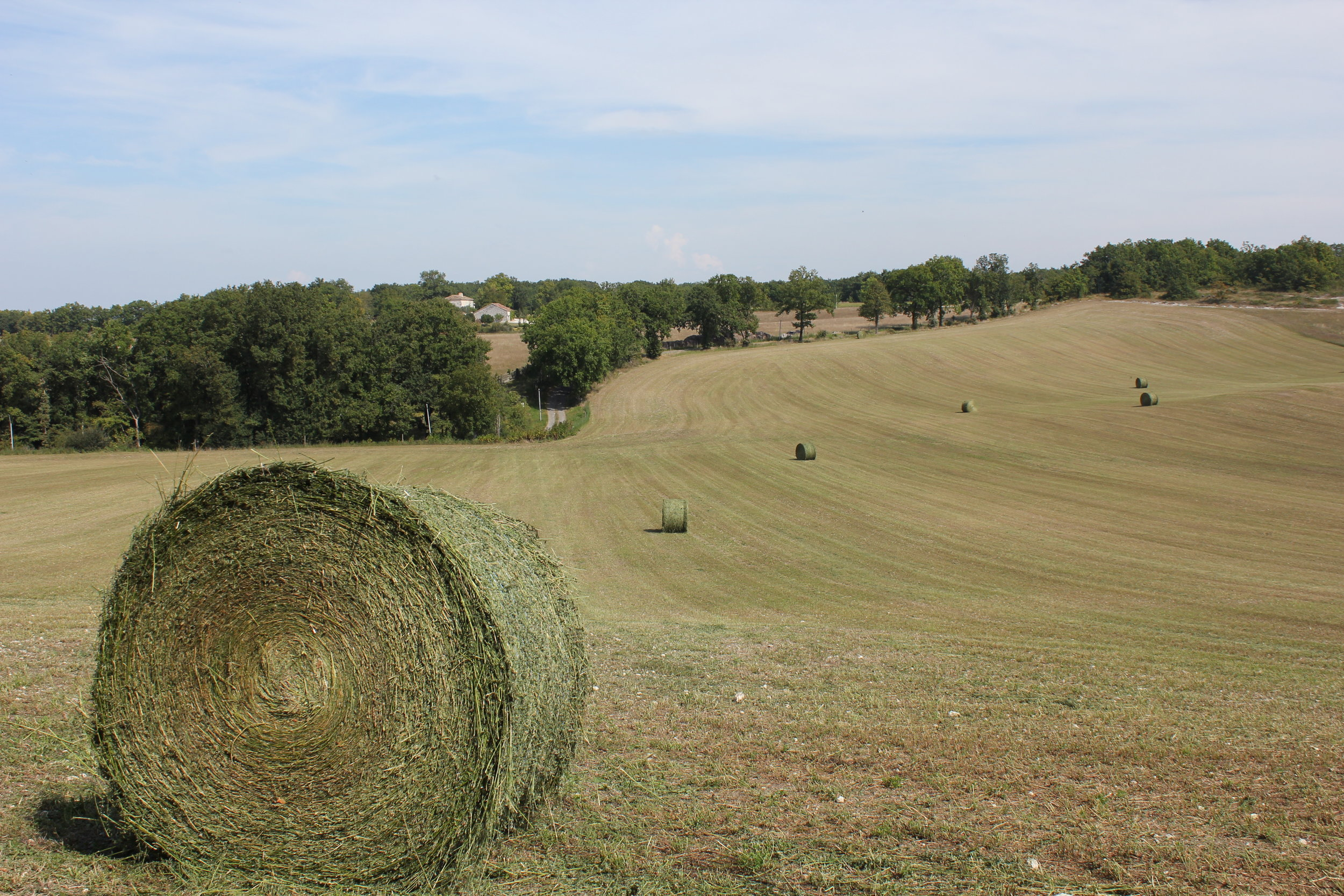 """Big bales in the """"Bolly View"""" field."""
