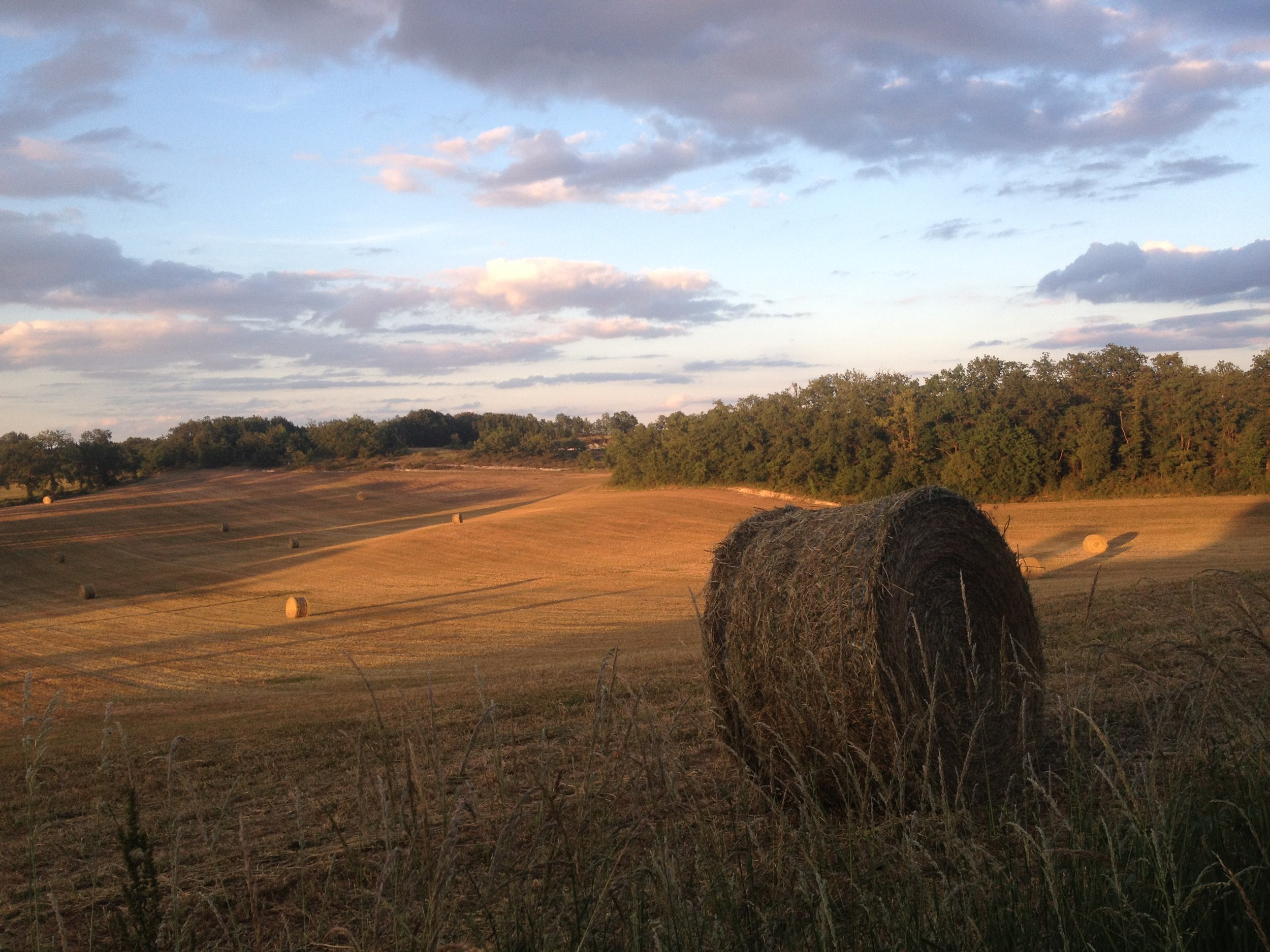 """Golden light on the """"Bolly View"""" field."""