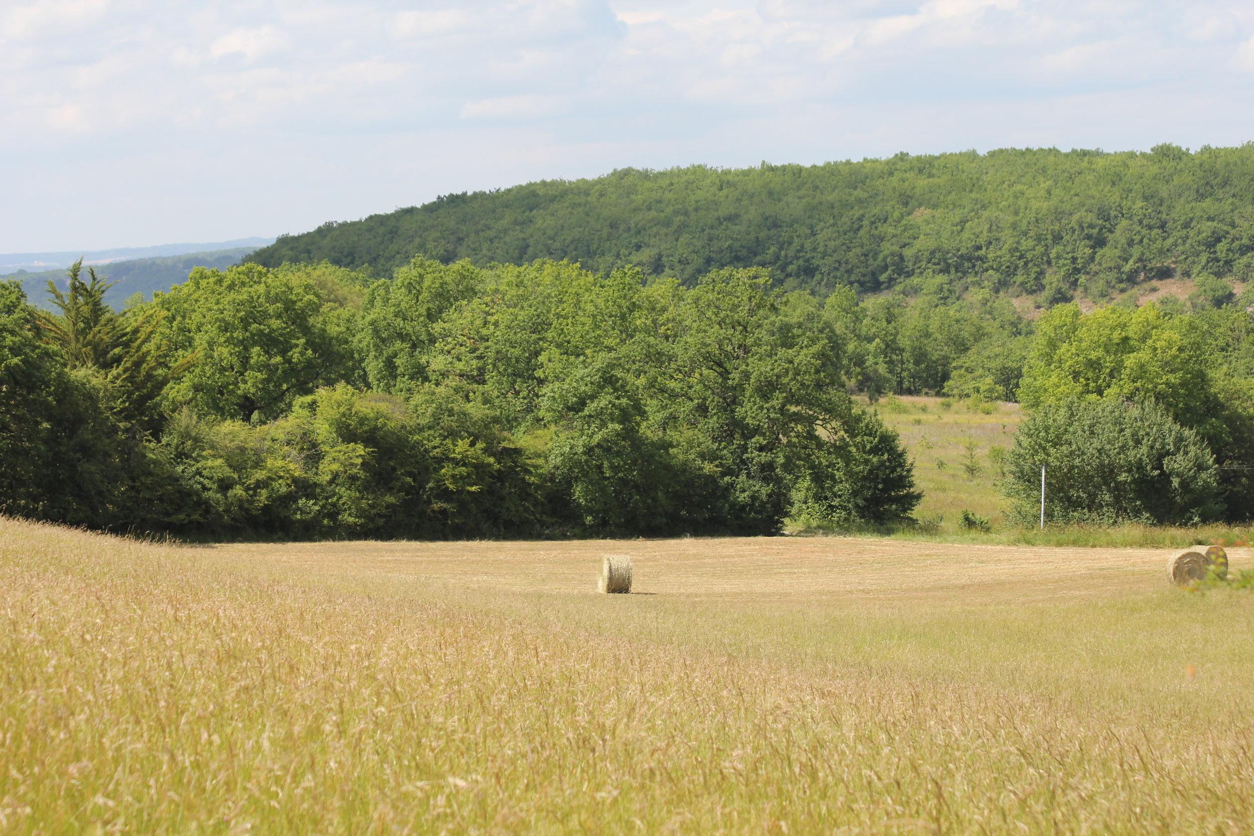 The big north field,