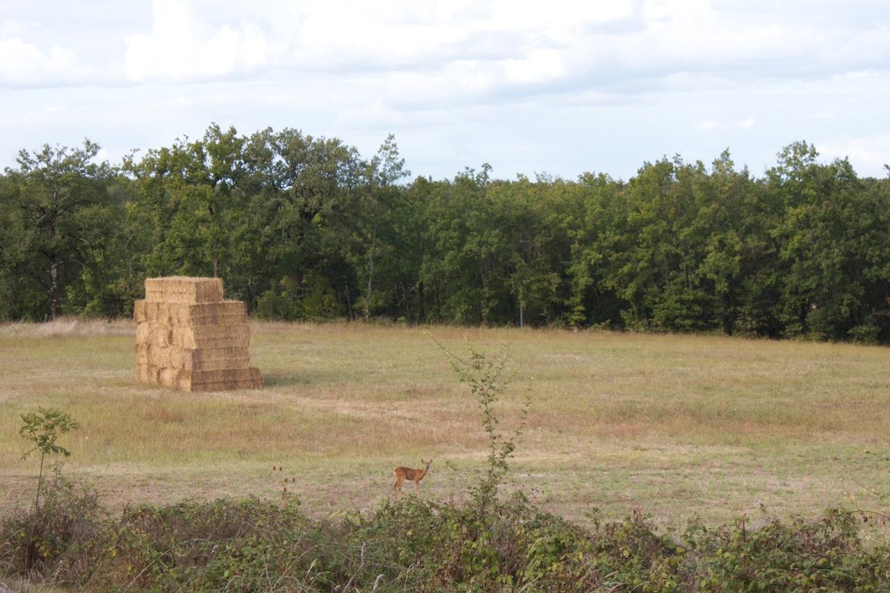 Brick bales. September 2016