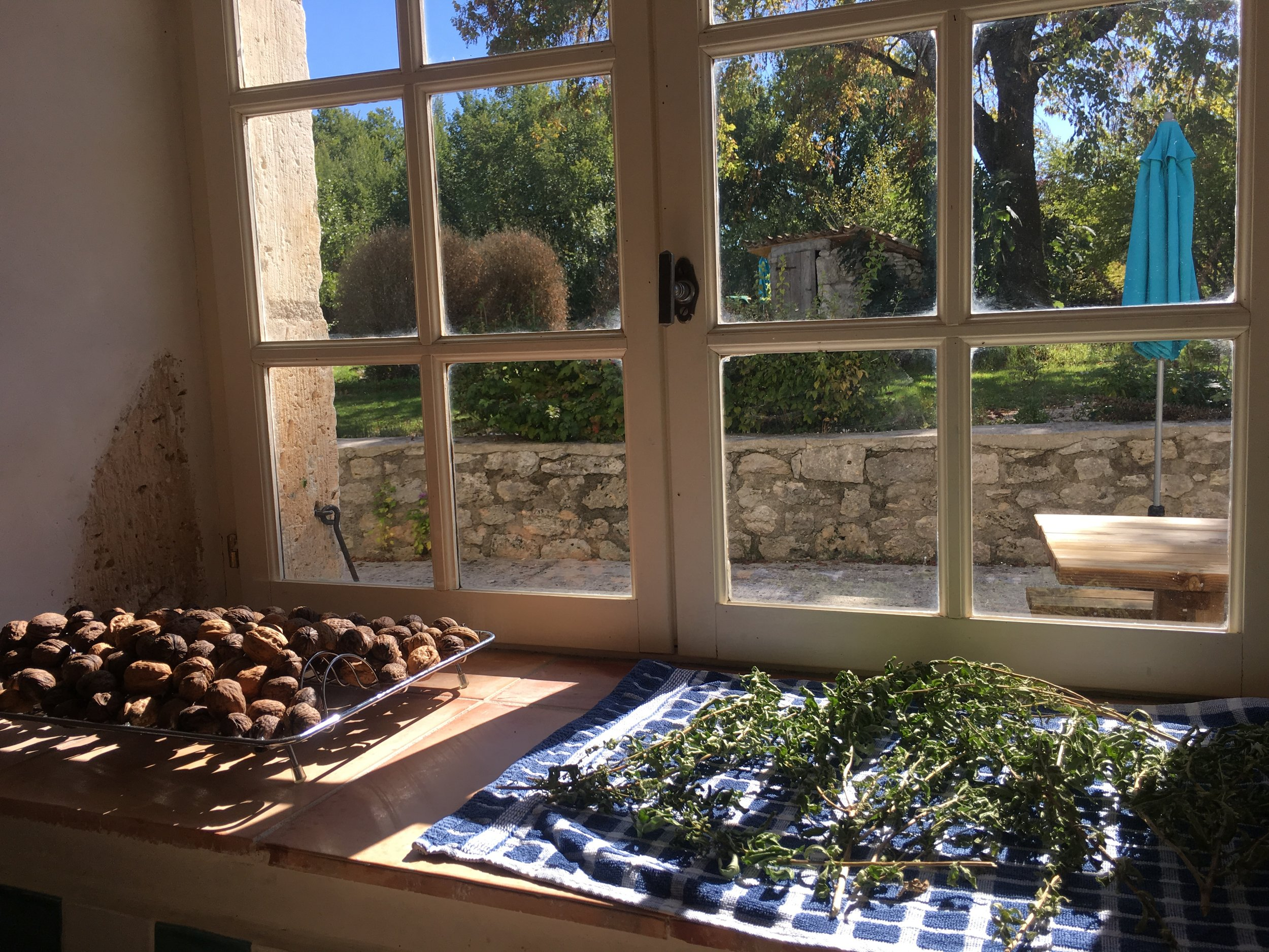 Drying herbs and the washed walnuts. Notice the topiary box through the window. A man with a digger came and removed the roots, the space is now ready for something new.