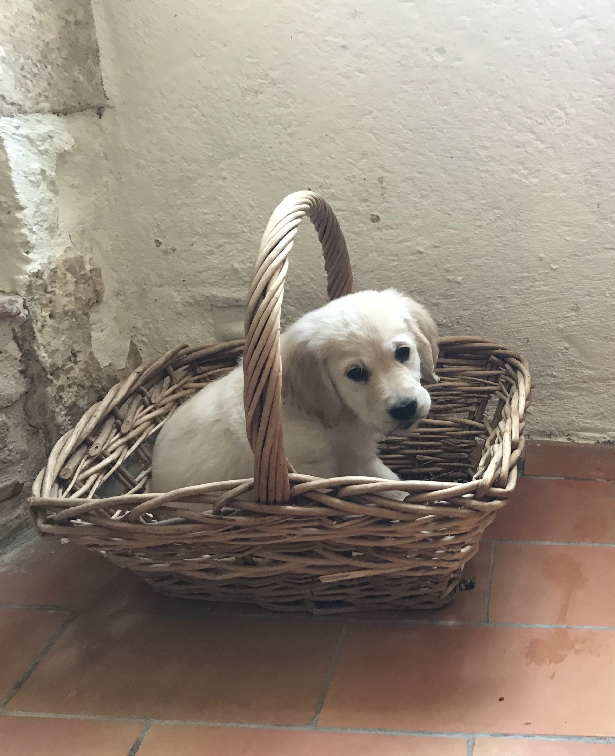 In the kindling basket, her love of sticks is starting early.