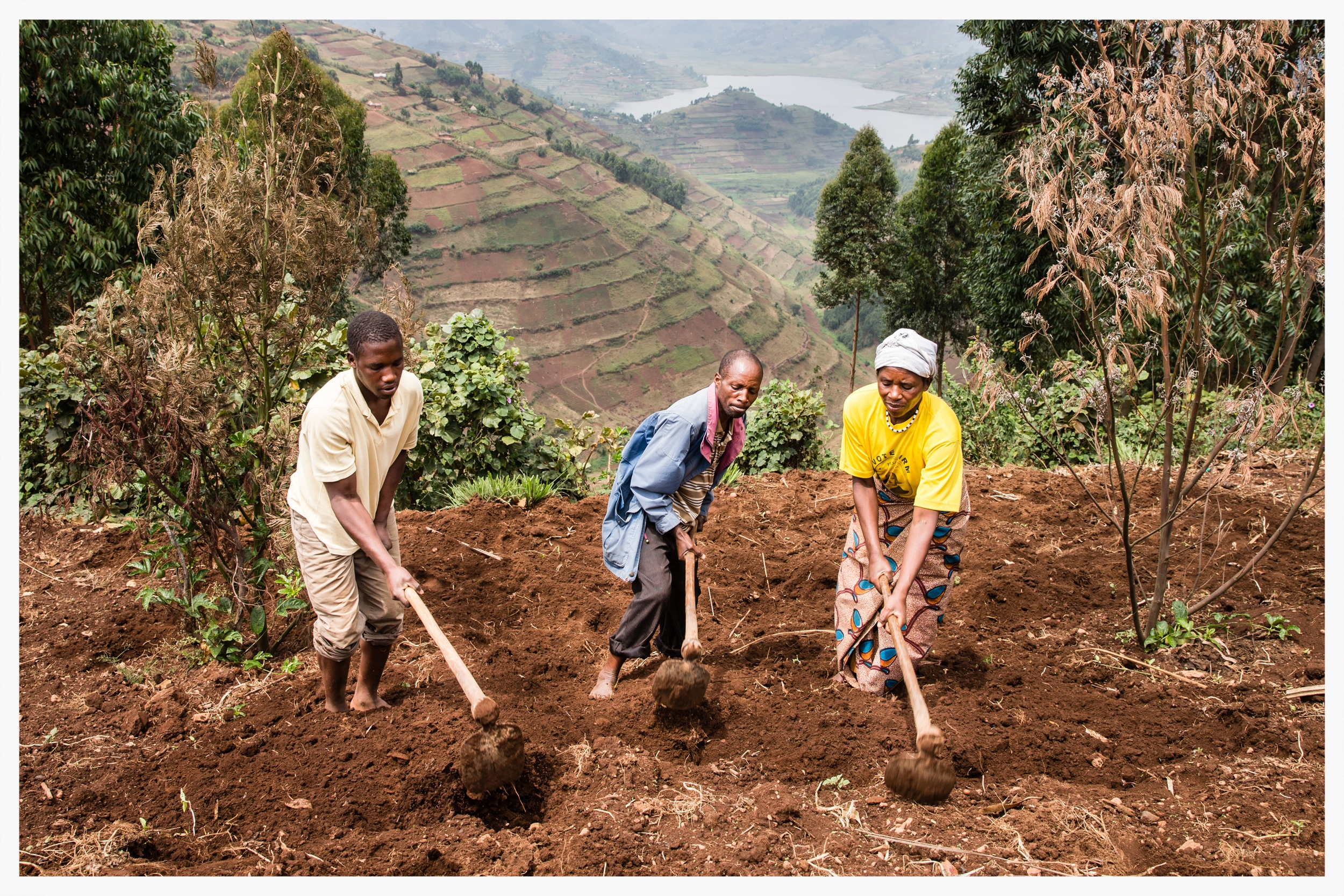 Milton and his family working in their potato field, Kabale district, south west Uganda. Photo © Marcus Perkins