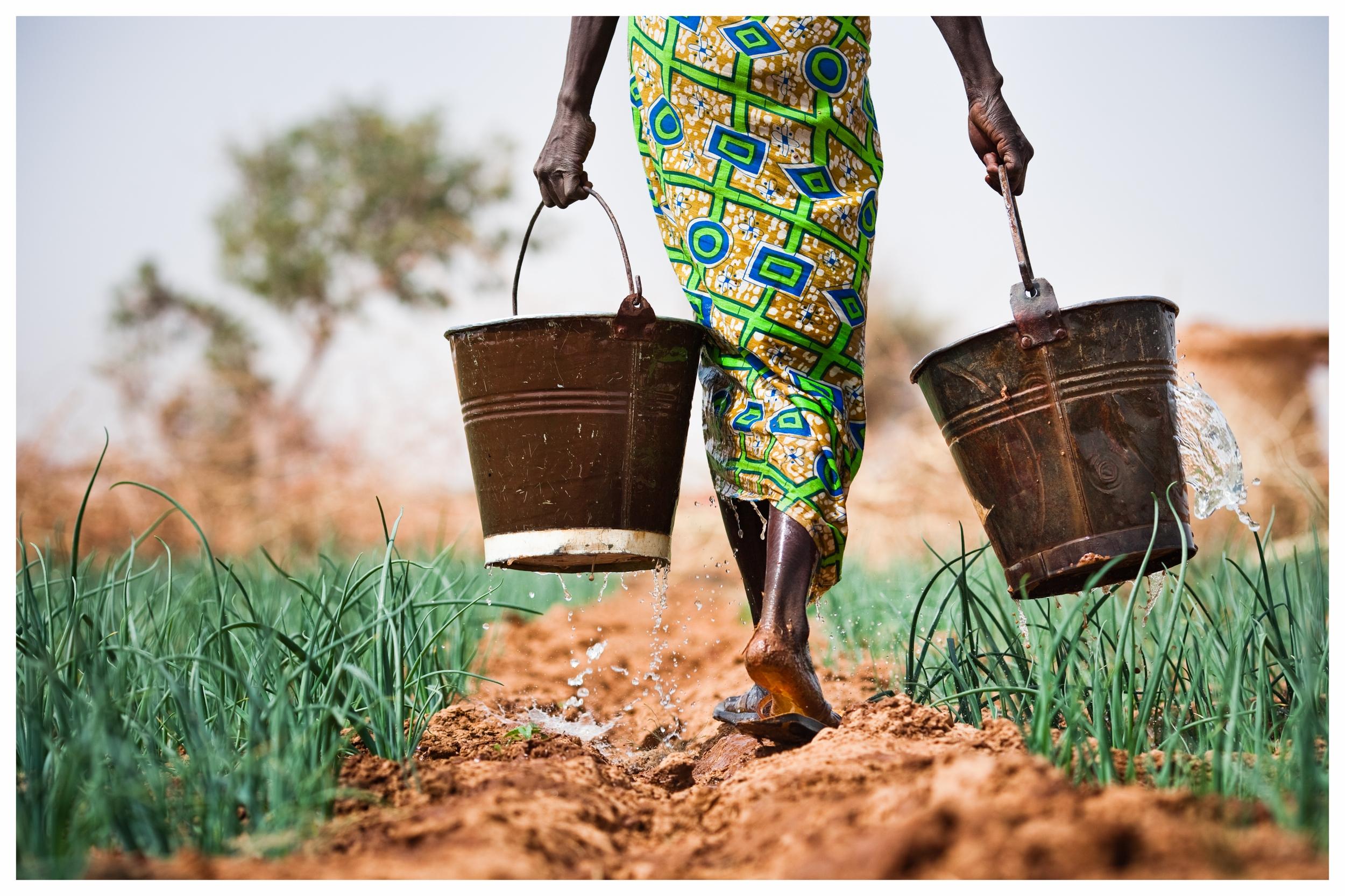 Subsistence farmer carries water for her onions.Kolguinguéssé village, southern Burkina Faso. Photo © Marcus Perkins
