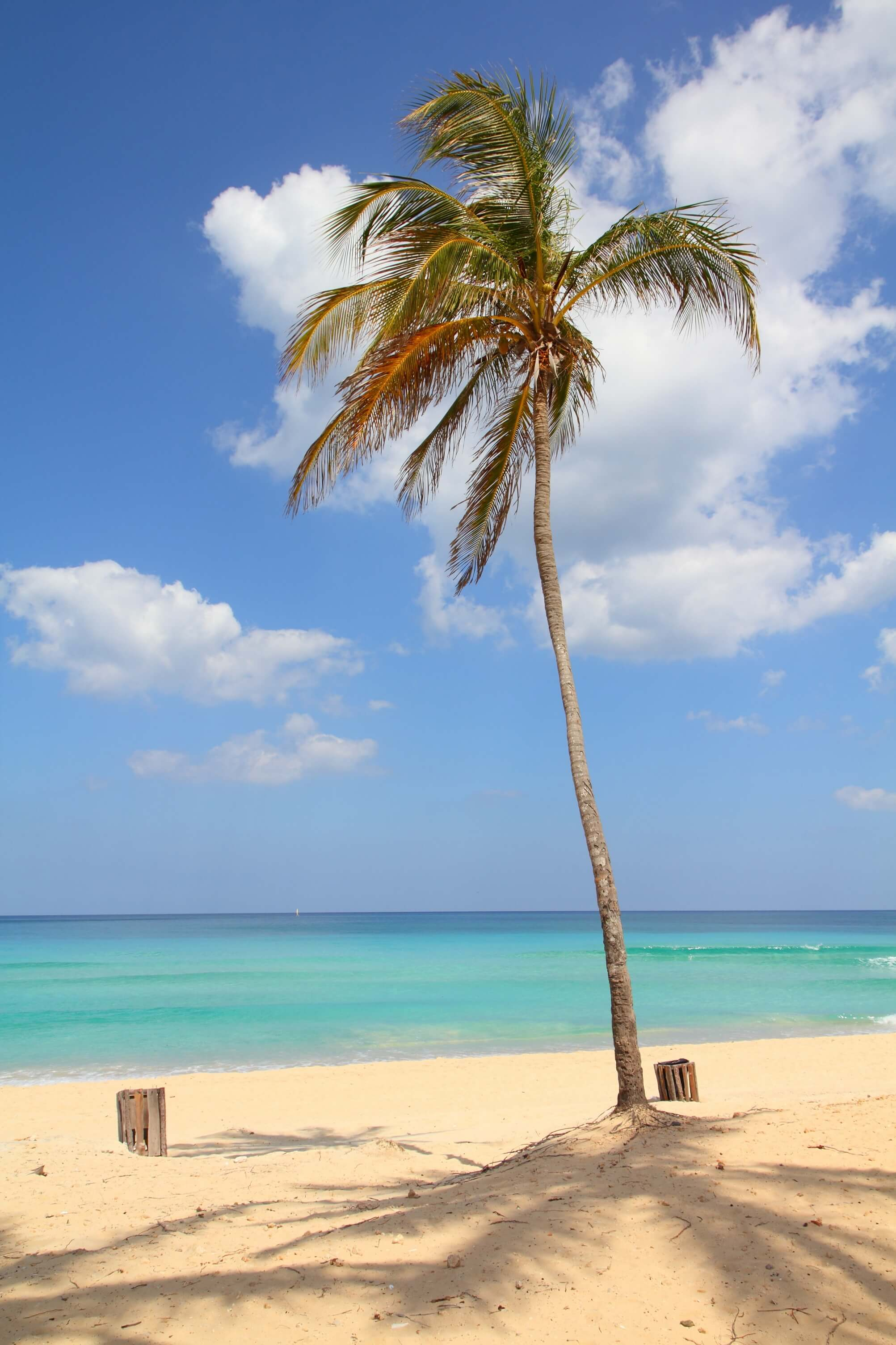 CUBA_CANDELA_beach_palm_tree_sand_crystal_waters