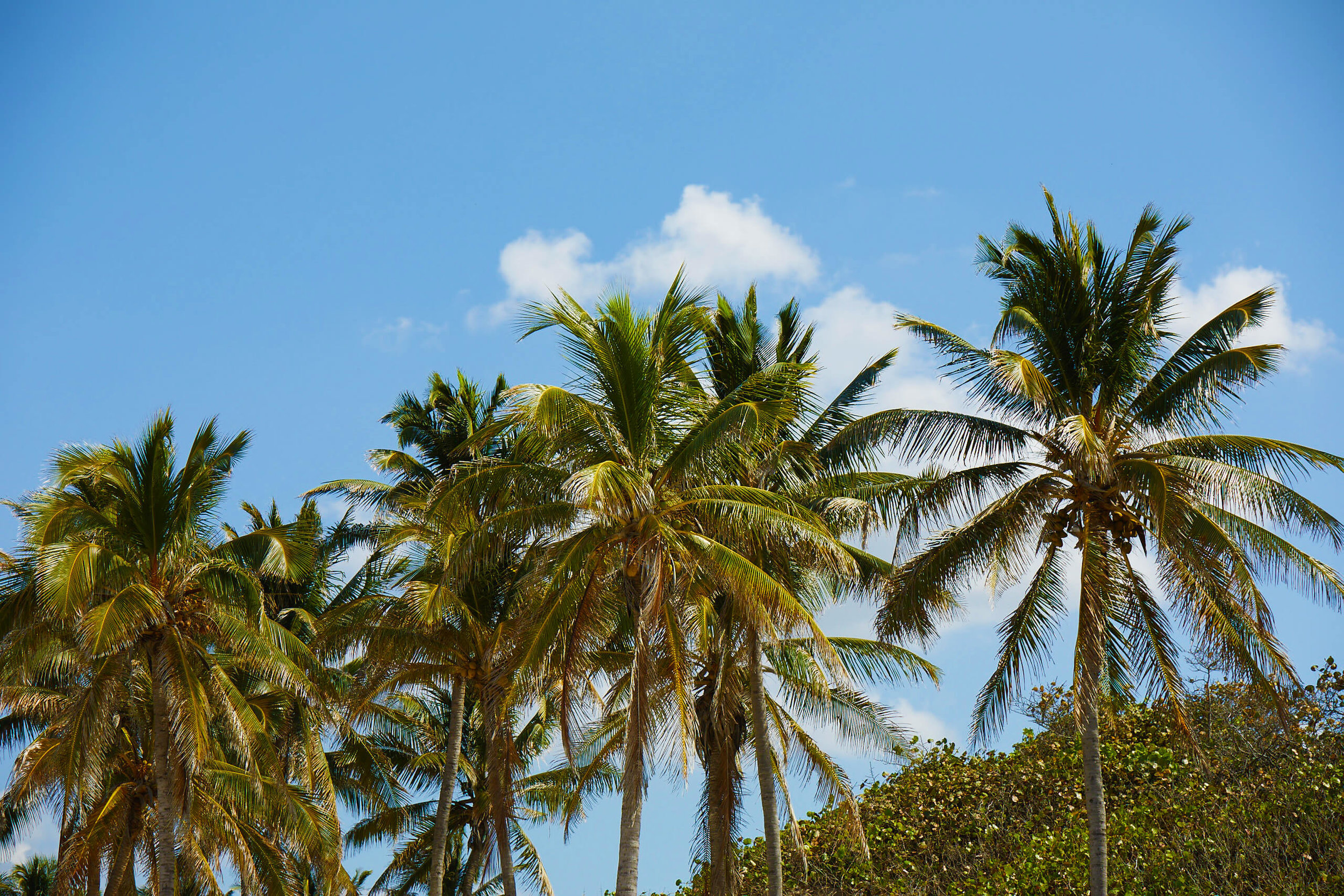 palm-trees-cuba-travel.jpg