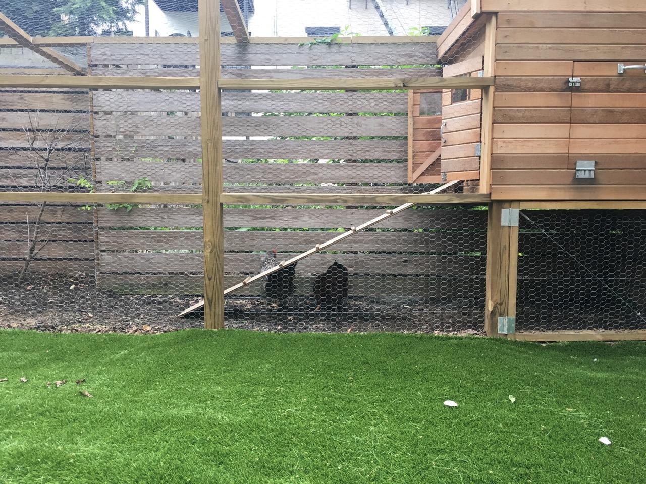 chicken-coop-backyard-brooklyn-garden-by-edible-petals-brooklyn-3.jpg