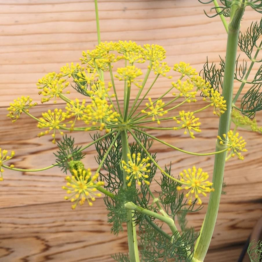 arbor-custom-edibles-rooftop-terrace-garden-by-edible-petals-brooklyn3.jpg