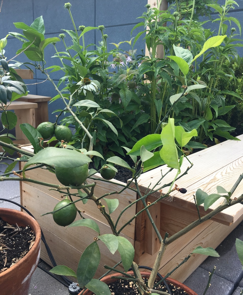 custom-edibles-rooftop-terrace-garden-by-edible-petals-brooklyn7.jpg