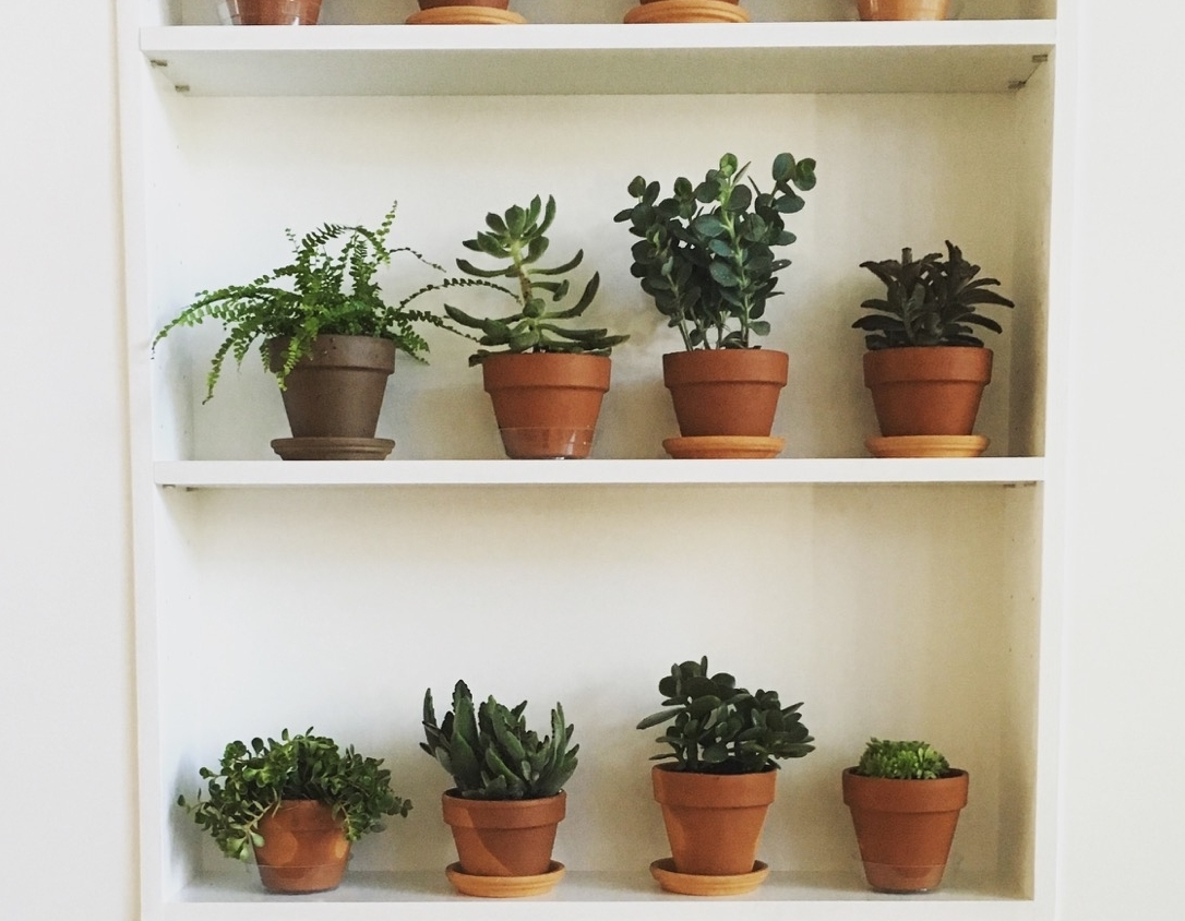 interior-plants-by-edible-petals-1.jpg