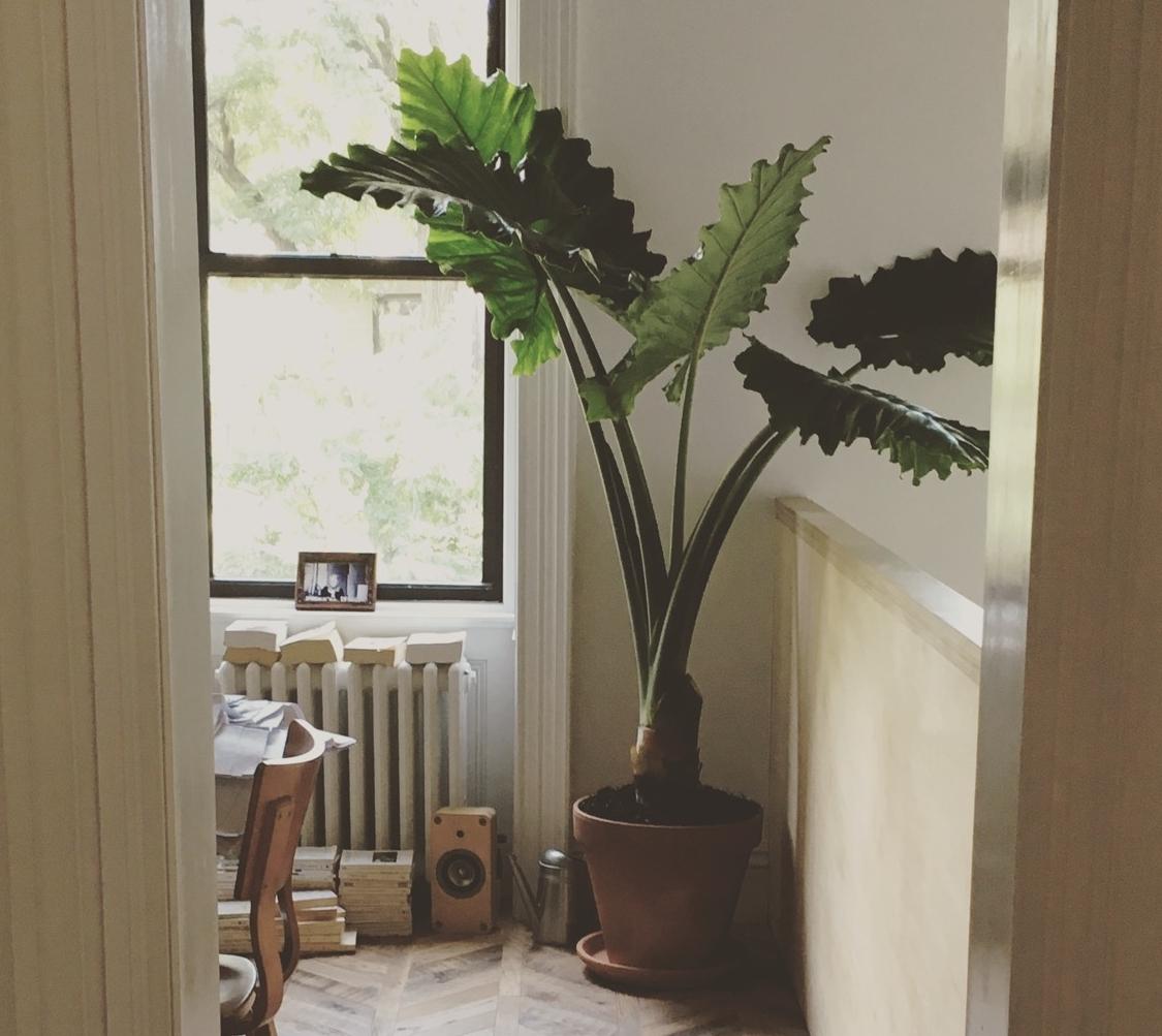 interior-plants-by-edible-petals-2.jpg