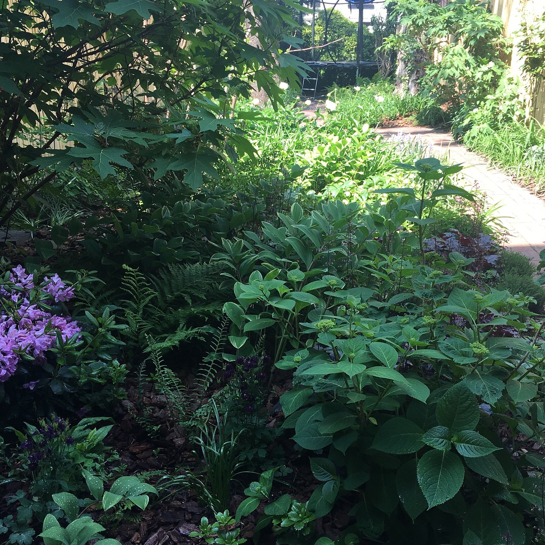 A month after planting, greens and purples in the shade.
