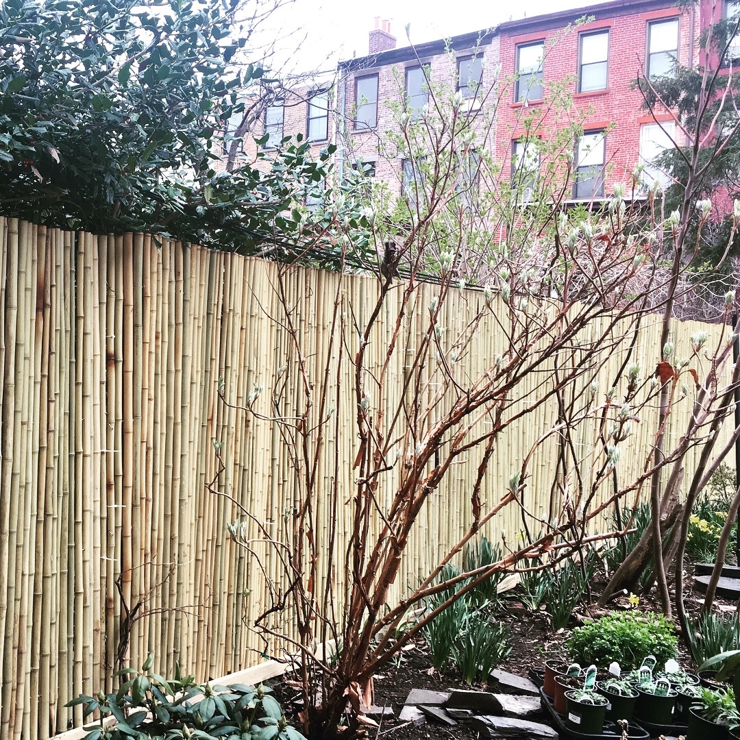 Starting with a clean slate, new bamboo fence and dormant perennials.