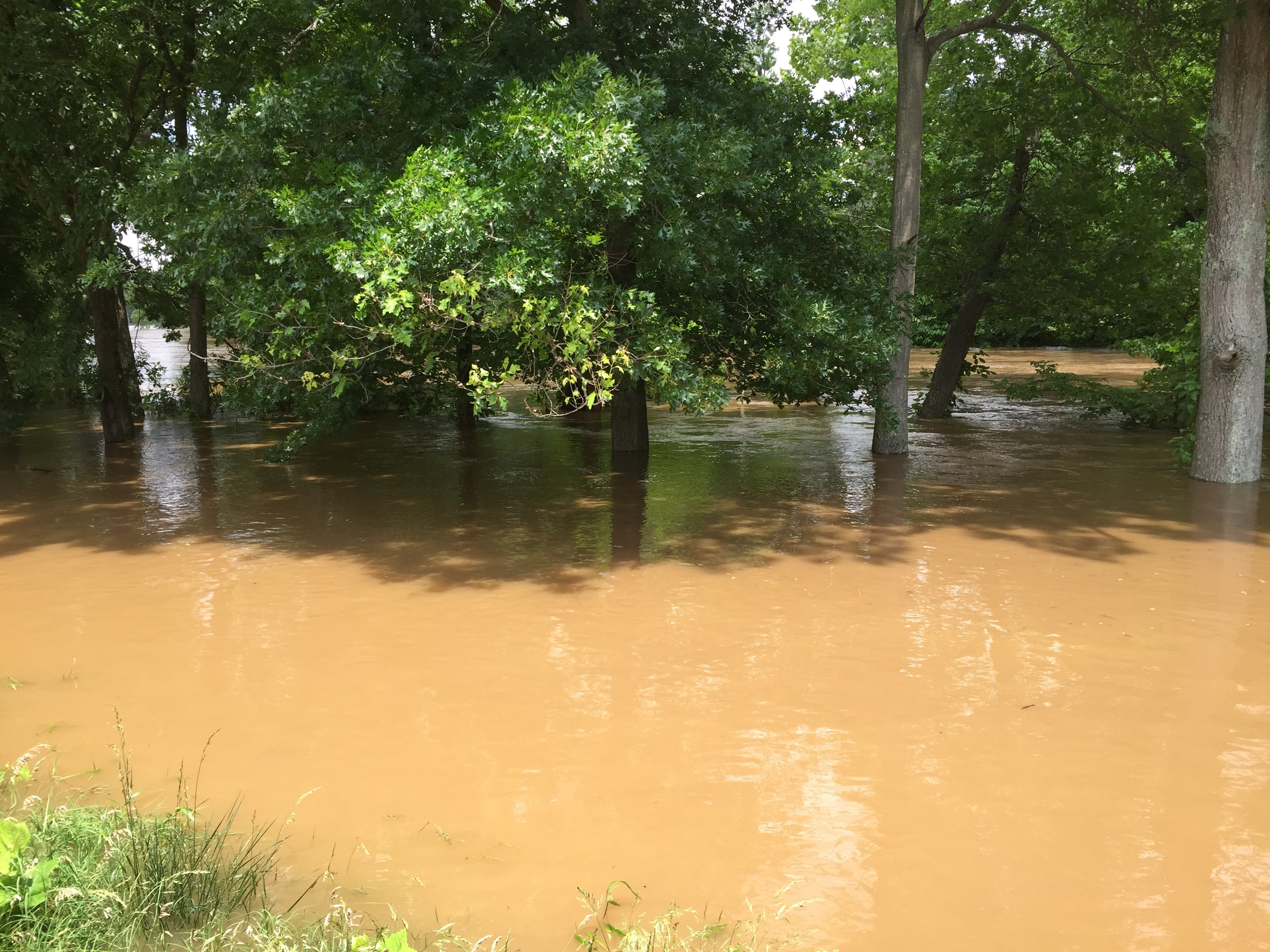 The river bank is normally behind the trees  (Photo credit: Greg Valentine)