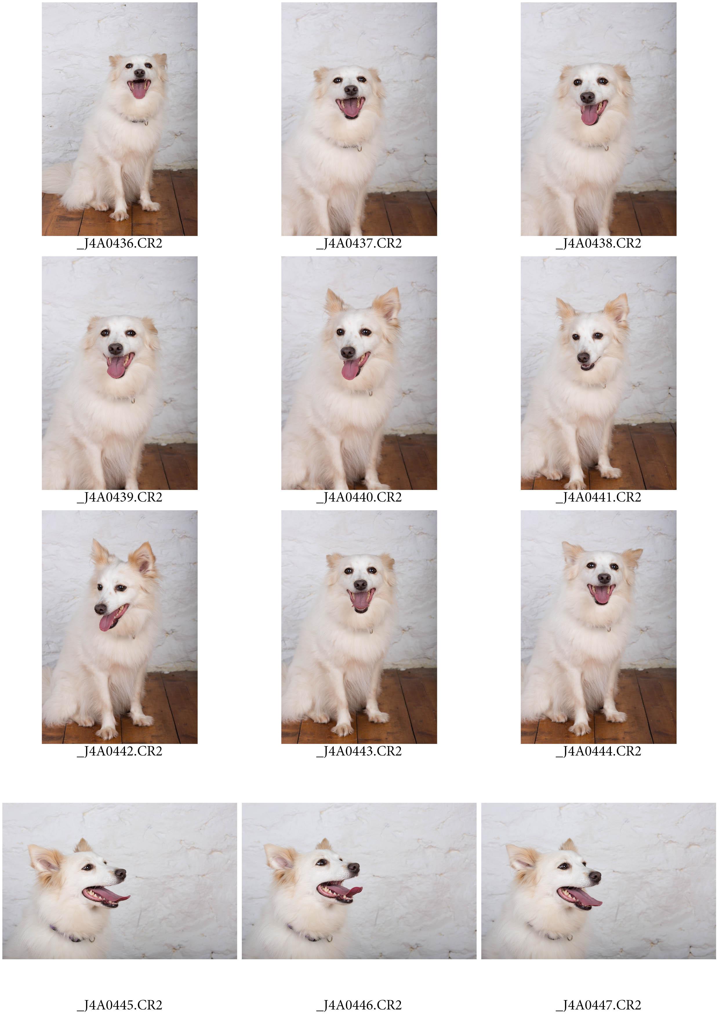 ContactSheet-002 copy.jpg