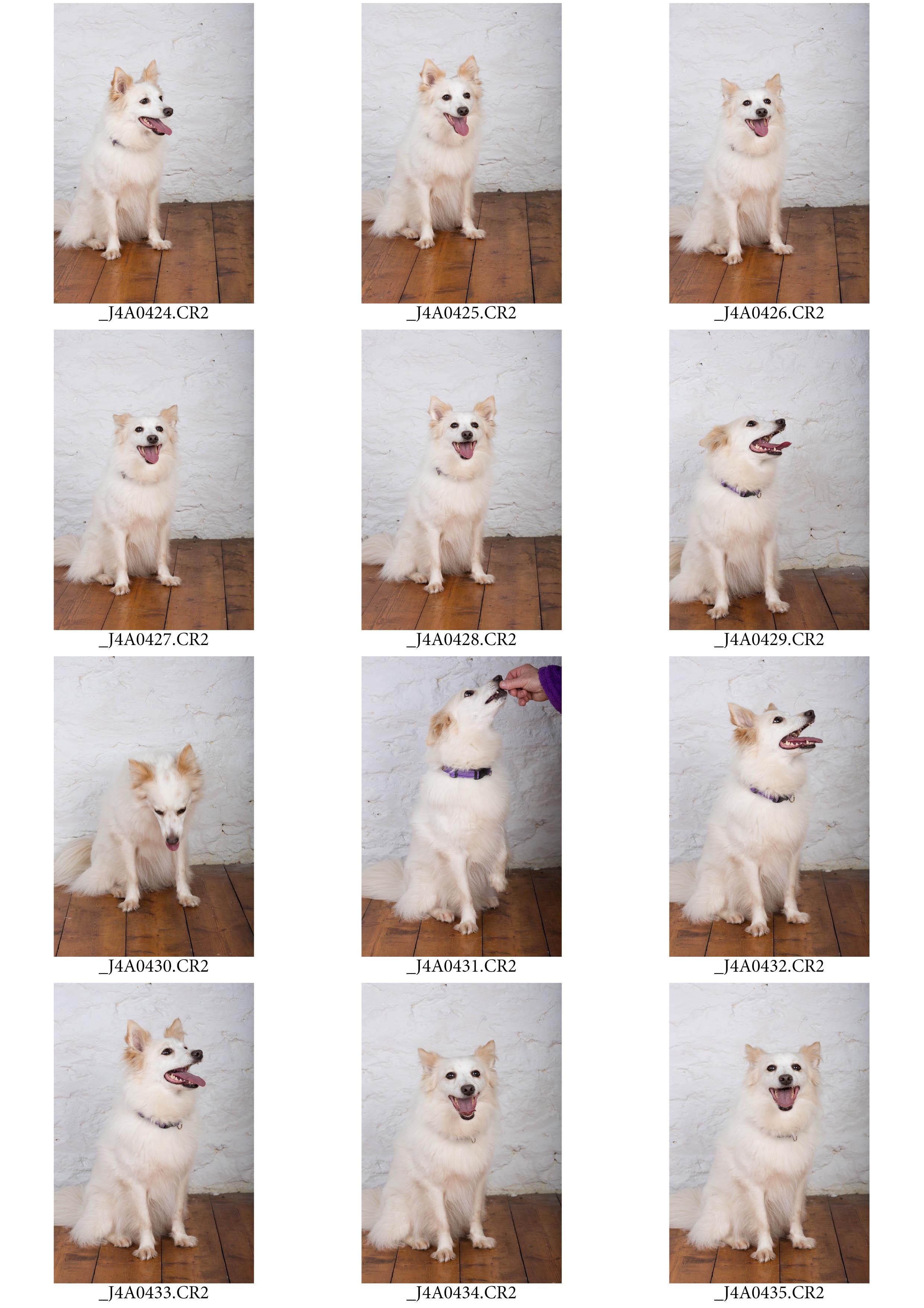 ContactSheet-001 copy.jpg