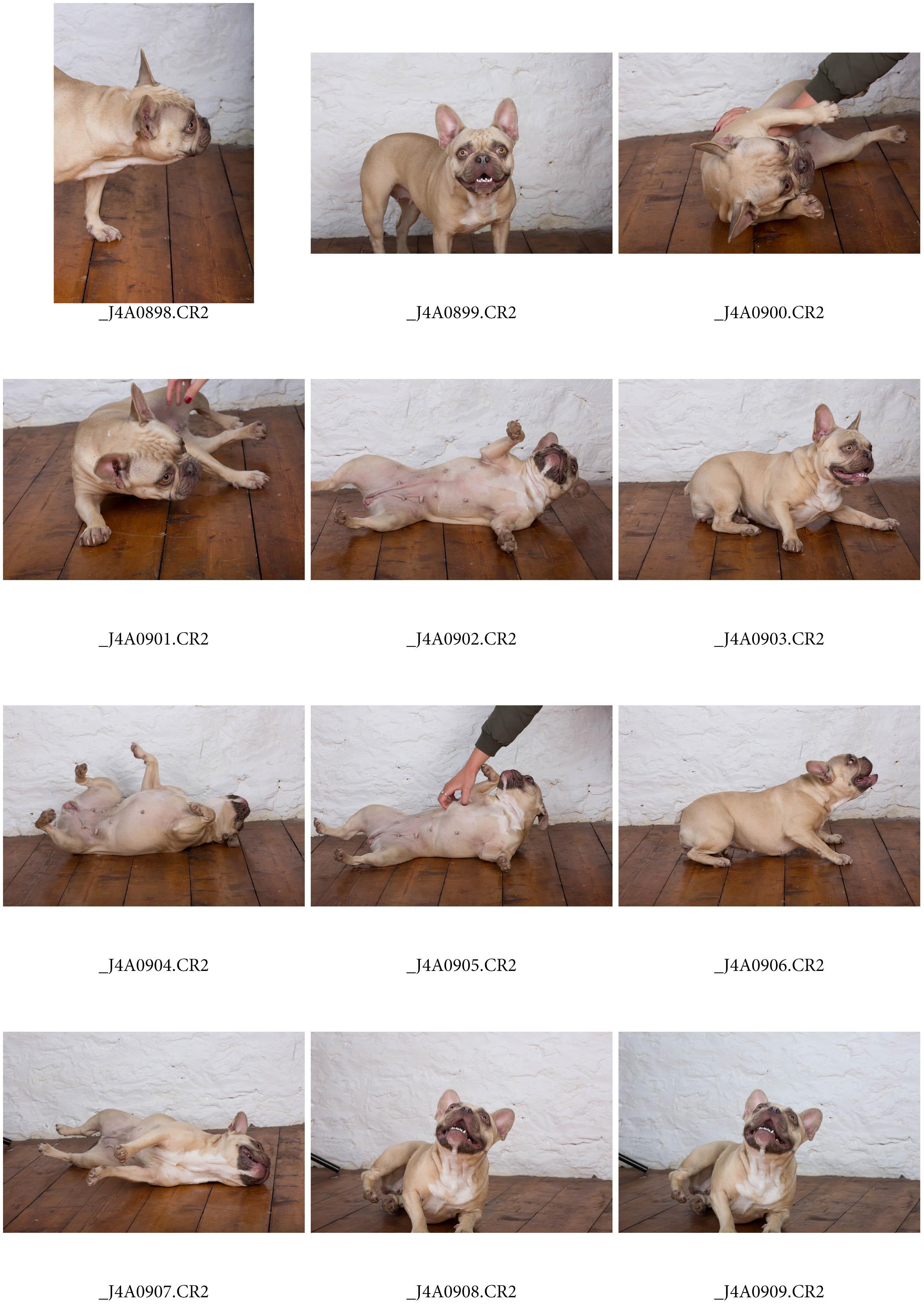 ContactSheet-004 copy.jpg